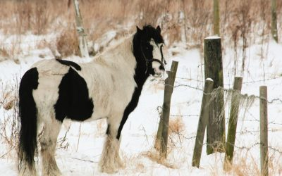Horse care: Get ready for autumn and winter